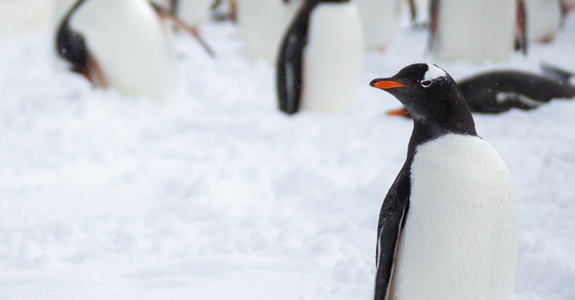 Short essay on penguin